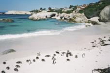 Sudáfrica: flora, fauna, desiertos, mar… Un país que te hará inolvidable tu visita